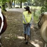 Informatie over de Paarden Oppas Service