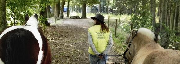 Paardenverzorger Paarden Oppas Service