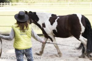 Tinkers onderzocht door Paarden Oppas Service