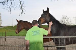 De paarden worden met liefde verzorgd