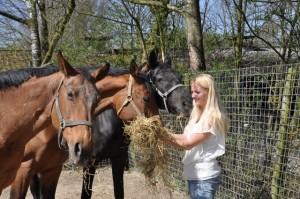 Aandacht voor het oudere paard