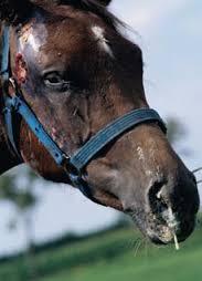 De Paarden Oppas Service over droes