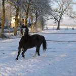Gerda deed een beroep op de Paarden Oppas Service