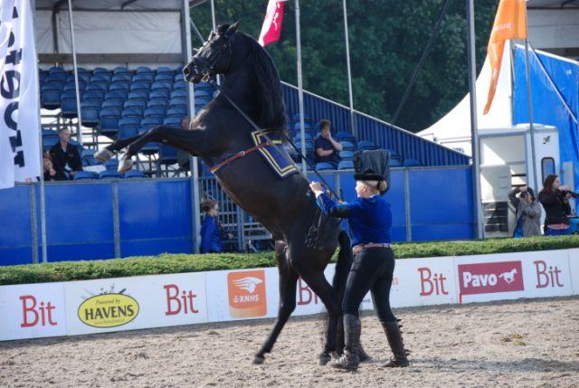 Linda, eigenaar PRE's, geinterviewd door Paarden Oppas Service