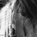 Tinkers onderzocht door de Paarden Oppas Service