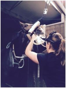 www.PaardenOppasService volgt Paardentandarts Klaartje van Delden