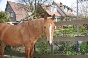 Kosten eigen paard www.PaardenOppasService.nl
