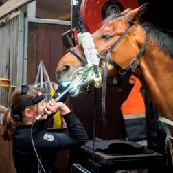 www.PaardenOppasService.nl over gebitsverzorging van je paard