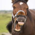 Haha, wat een grap - www.PaardenOppasService.nl