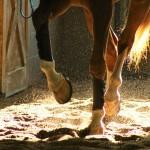De Paarden Oppas Service over hoefkatrol