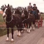 Eenhoorn formatie Paarden Oppas Service