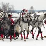 Trojka Paarden Oppas Service