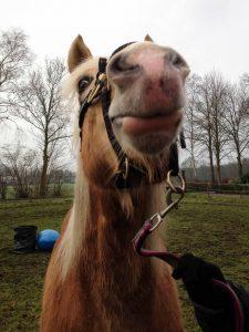 Hester Stasse, gastblogger Paarden Oppas Service